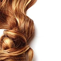 hair folicle